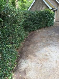Hedge Cutting in Frensham