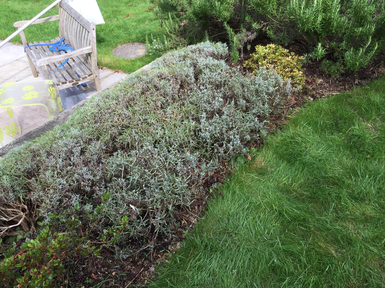 Recent work toby s garden home maintenance services for Garden maintenance